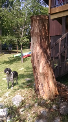 """Our Portuguese Water Dog """"Bella"""" before the Owl was concieved"""
